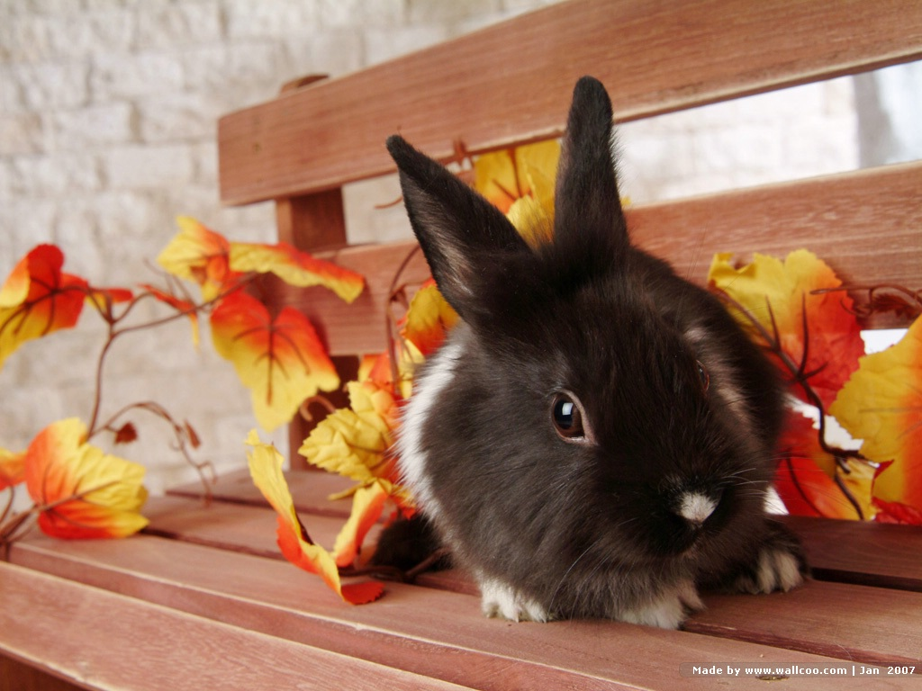 Fall And Autumn Wallpaper 桌布天堂 可愛兔子 小灰兔 36張3